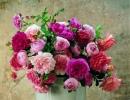 rose-david