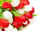 tulipani-bianchi-rossi