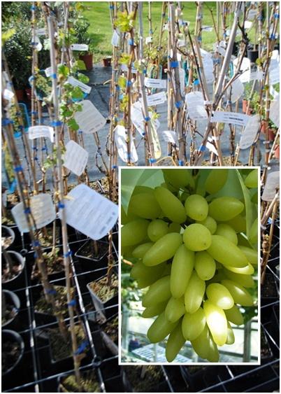 Piante e terricci tecno verde for Piante da frutto online
