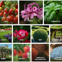 Nuovo Shop Online di Sassi Garden
